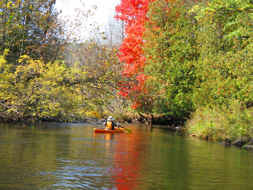 sturgeon river fall - image
